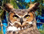 owl-Ohio-Wildlife-Center